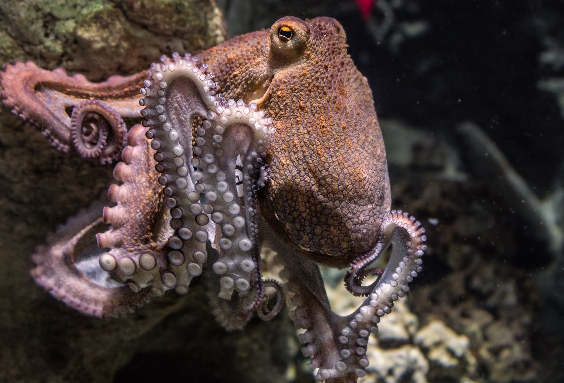 Octopus taken off the menu to make students feel 'comfortable'