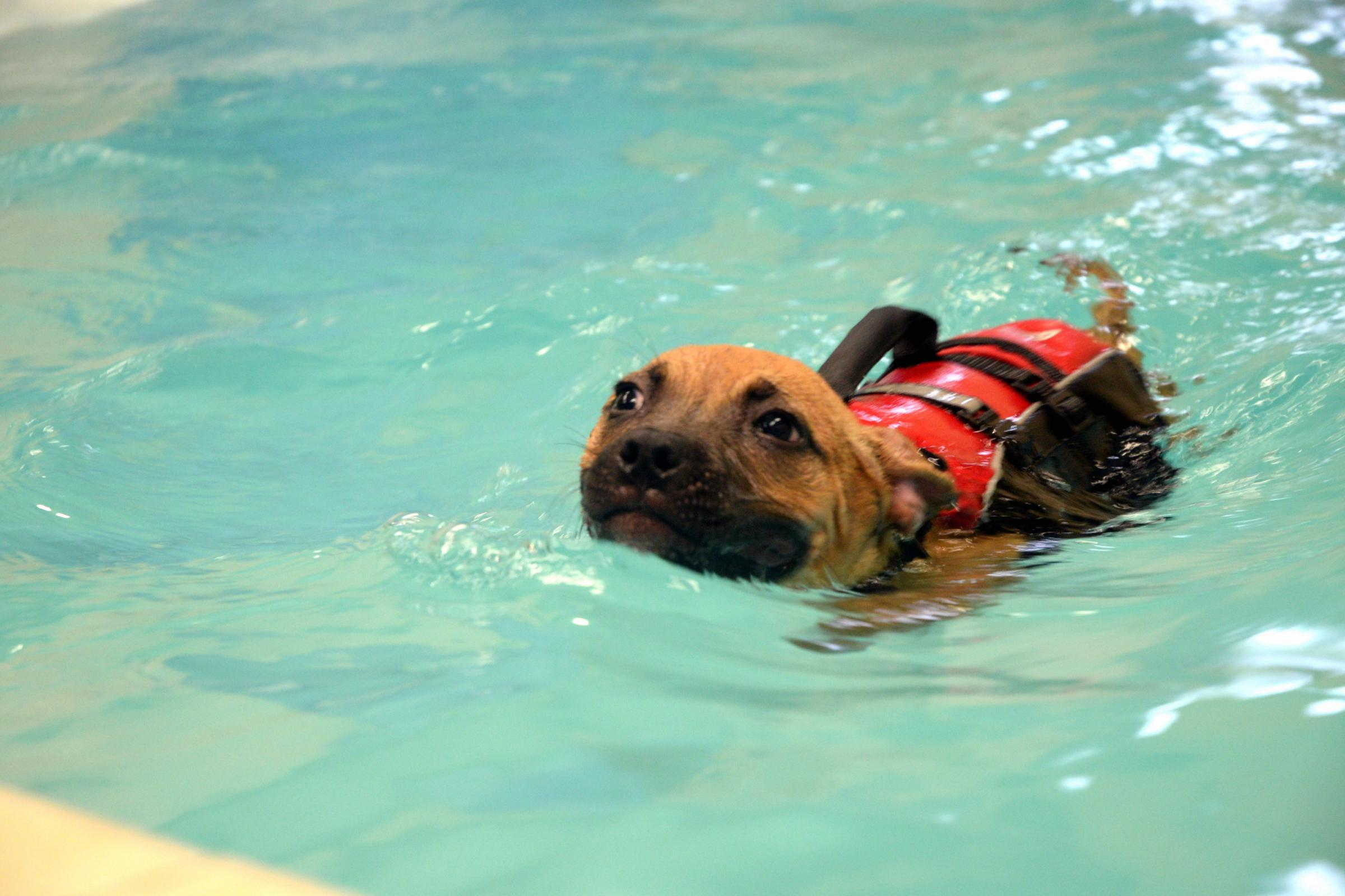 Dog hydrotherapy centre coming soon
