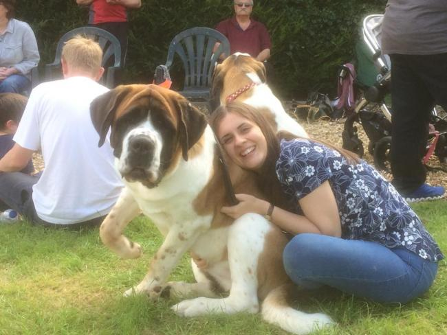 This is Lola the Saint Bernard from Kidlington! ❤️