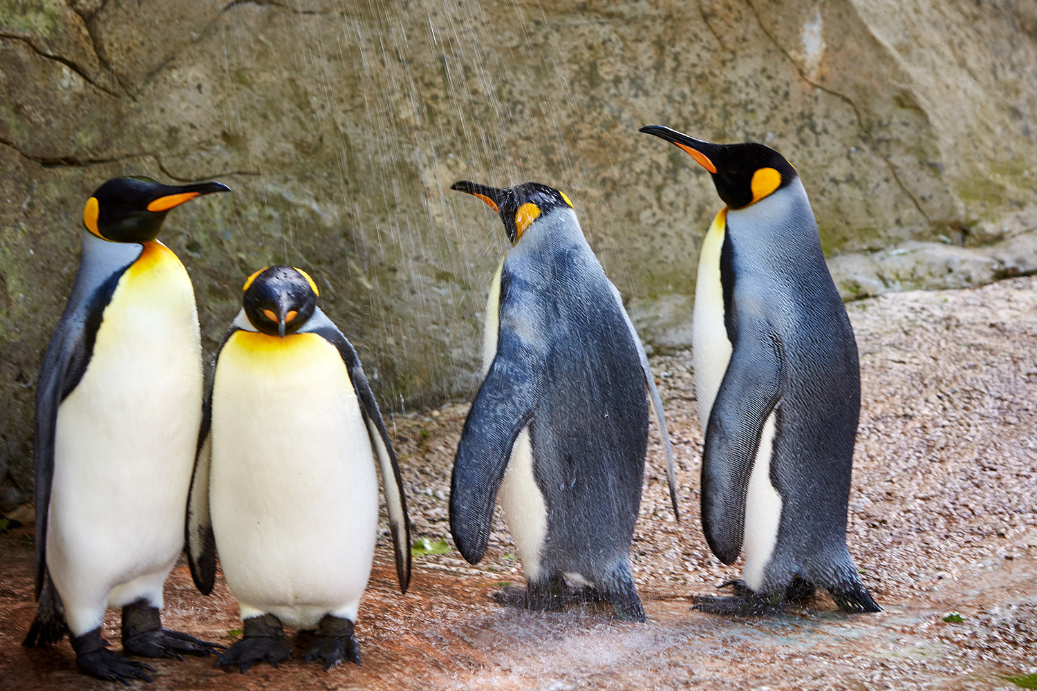 World Penguin Day Celebrations at Birdland