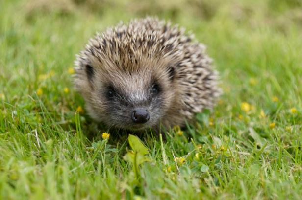 Pupils from Fitzharrys school allegedly used hedgehog as football