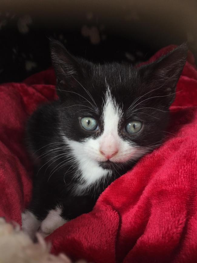 Kitten found dumped in garden section of Wilko