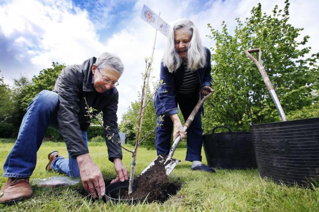 Former Oxford city council leader Bob Price and Wendy Skinner Smith from the ODFAA plant the tree Picture: Ed Nix