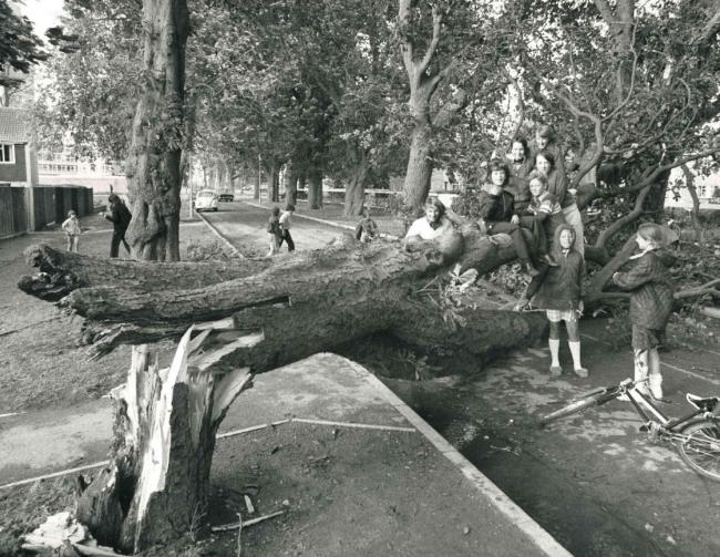 Children had a lucky escape when tree fell in September, 1975.