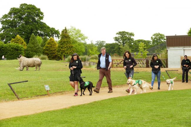 Dogs for Good trainee assistance dogs head to Cotswold Wildlife Park to test their skills, taking in the sights, sounds and smells while out among the crowds